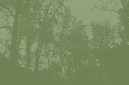 Urban Forest Management