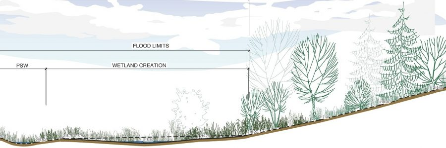 Beacon Environmental Services - Landscape Architecture - Wetland Cross Section