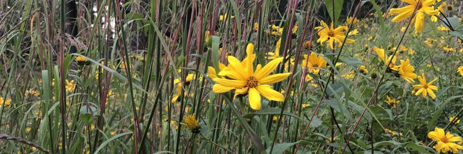 Habitat Management And Ecological Monitoring